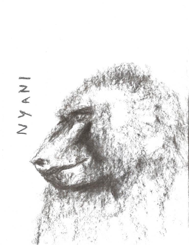 Nyani, 2011