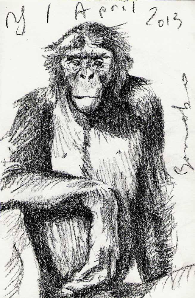 Bonobo, 2013