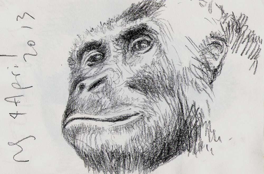 Gorilla, 2013