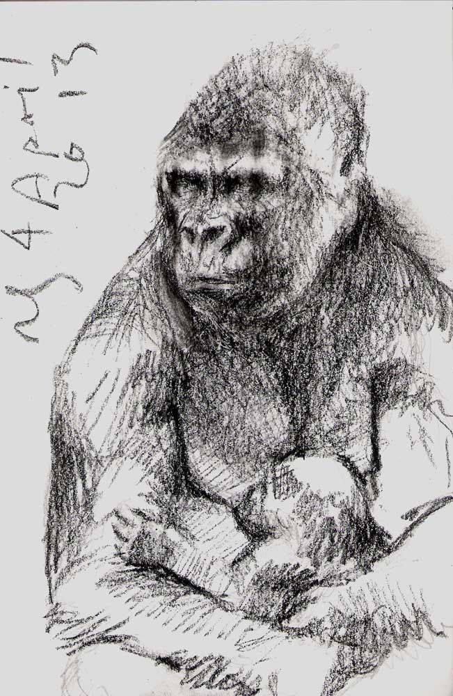 Gorilla Mother and Infant, Taronga Zoo, 2013