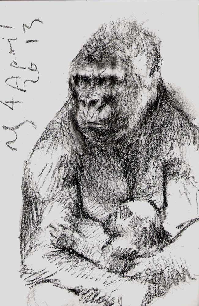 Gorilla Mother and Infant, Taronga Zoo, 2013