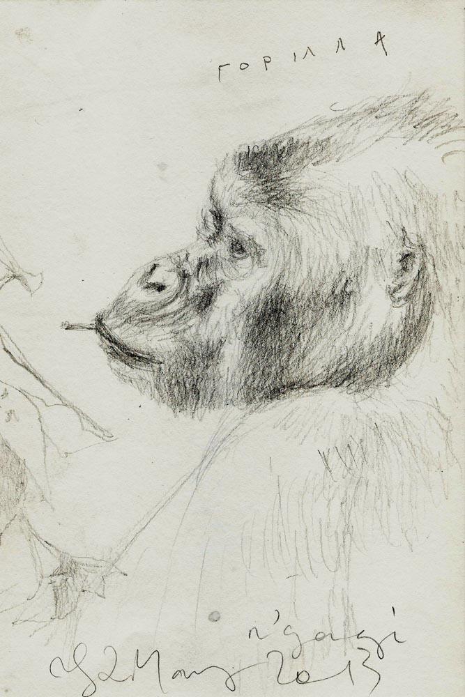 Silverback Gorilla - Nkuringo Group, Uganda,2013